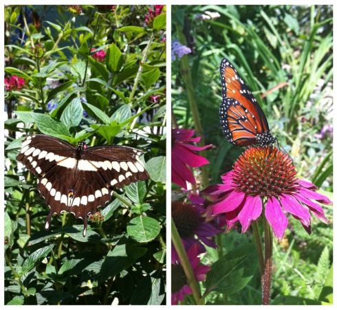 Butterflies Alive! at the Santa Barbara Museum of Natural History